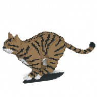 Brown Tabby Cats (6)