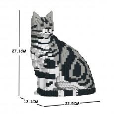 American Shorthair Cat 01S