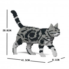 American Shorthair Cat 02S