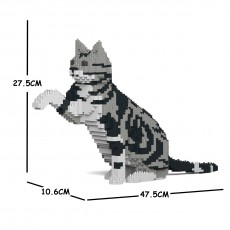 American Shorthair Cat 03S