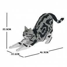 American Shorthair Cat 04S