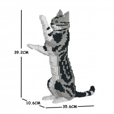 American Shorthair Cat 05S