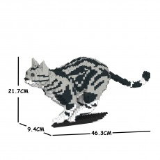 American Shorthair Cat 06S