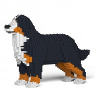 Bernese Mountain Dog  (1)