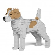 Jack Russell Terrier  (3)