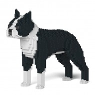Boston Terrier (2)