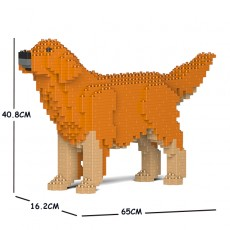 Golden Retriever 02C-M02